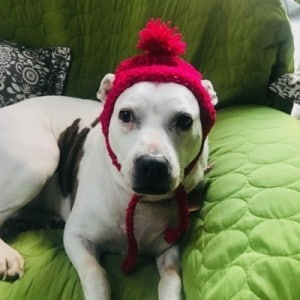 Dog in crochet hat